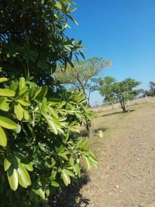 Miraacle Premium Villa Plots GNT Road Elevation