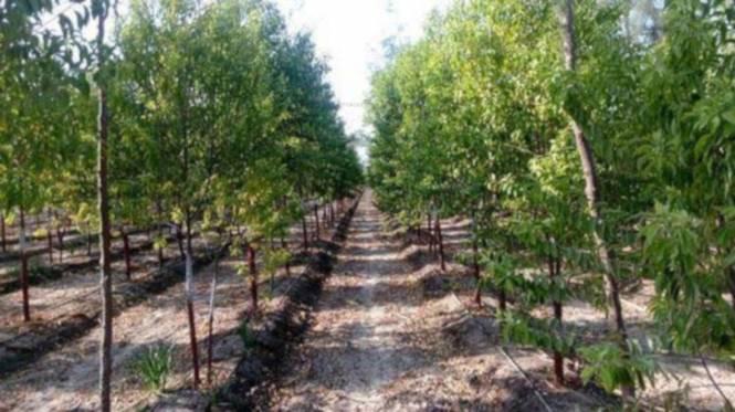 lepakshi-greens Landscaping & Tree Planting