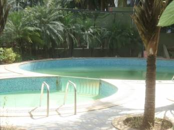whistling-palms Swimming Pool
