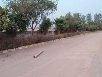 1458 sqft, Plot in Builder Project Near Jewar Airport At Yamuna Expressway, Greater Noida at Rs. 16.2000 Lacs