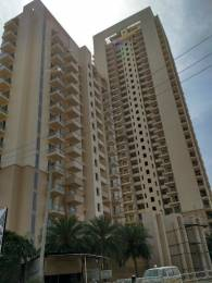 255 sqft, 1 bhk Apartment in DLF The Primus Sector 82A, Gurgaon at Rs. 6.0000 Lacs