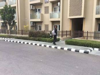 1265 sqft, 3 bhk Apartment in Paras Tierea Sector 137, Noida at Rs. 19000
