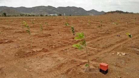 9585 sqft, Plot in Builder Gaythri vanam Vijayawada Guntur Highway, Vijayawada at Rs. 9.9990 Lacs