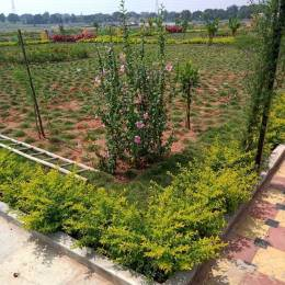 1350 sqft, Plot in Builder DTCP approved layout Shadnagar, Hyderabad at Rs. 11.0000 Lacs