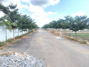 1503 sqft, Plot in Builder Project Arundelpet, Guntur at Rs. 18.5000 Lacs