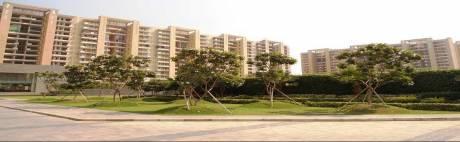 1578 sqft, 3 bhk Apartment in Tulip Violet Sector 69, Gurgaon at Rs. 1.1000 Cr