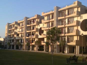 1795 sqft, 3 bhk Apartment in Builder Omaxe North Avenue II S4 Sector 15 omaxe city, Bahadurgarh at Rs. 10000