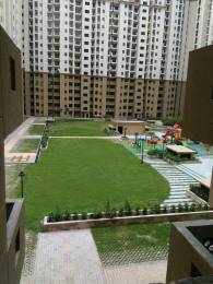 1195 sqft, 2 bhk BuilderFloor in Galaxy Royale Sector 16C Noida Extension, Greater Noida at Rs. 47.0000 Lacs