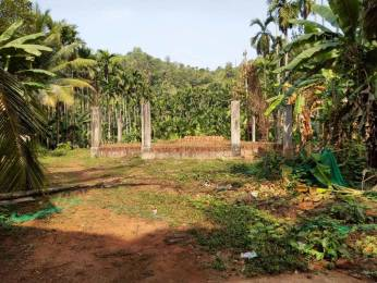 13068 sqft, Plot in Builder Project Narikkuni Koduvally Road, Kozhikode at Rs. 1.0000 Cr