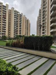 1578 sqft, 3 bhk Apartment in Tulip Violet Sector 69, Gurgaon at Rs. 99.0000 Lacs