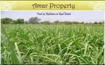 Amar Property