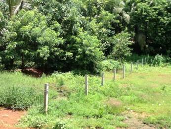 10893.066799999999 sqft, Plot in Builder 25 Cents Residential Land FOR SALE Naduvattam Thanneerkodu Road, Malappuram at Rs. 55.0000 Lacs
