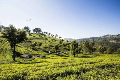8710 sqft, Plot in Builder WELL DEVELOPED PLOTS Coonoor, Ooty at Rs. 65.0000 Lacs