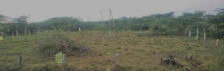 3600 sqft, Plot in Builder telecom nagar Satrampadu, Eluru at Rs. 70.0000 Lacs