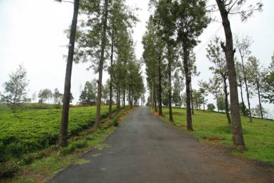 1500 sqft, Plot in Builder Project Bengalmattam, Ooty at Rs. 5.2500 Lacs