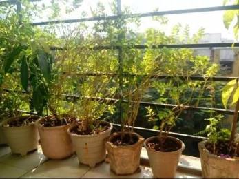 940 sqft, 2 bhk Apartment in ARK Kishor Angan Kalwa, Mumbai at Rs. 95.0000 Lacs