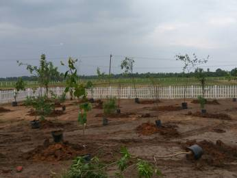 600 sqft, Plot in Builder 100 percent cashback offer properties property Acharapakkam, Chennai at Rs. 3.0000 Lacs