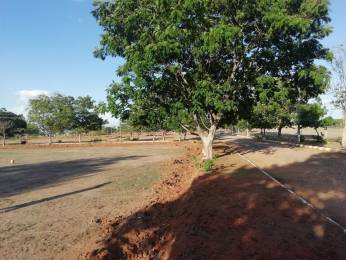 3600 sqft, Plot in Builder Project Amangal, Hyderabad at Rs. 15.0000 Lacs