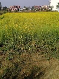 4050 sqft, Plot in Builder Project Balawala, Dehradun at Rs. 72.0000 Lacs